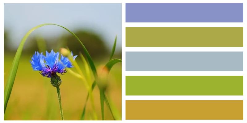 paleta de color azul aciano paisaje