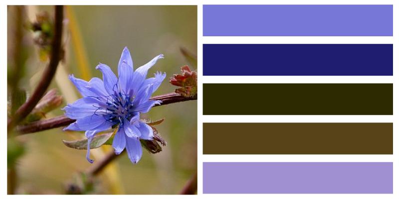 paleta de color azul aciano rebelde