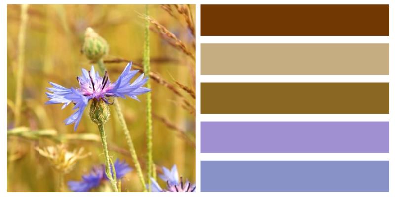 paleta de color azul aciano maizal